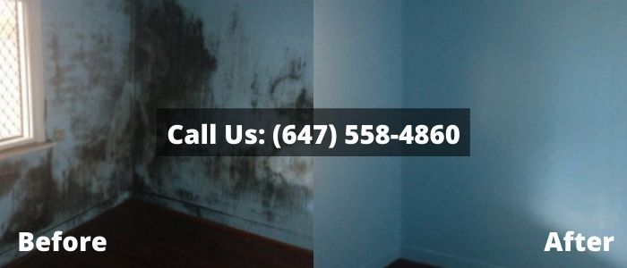 Mold Removal and Inspection in House