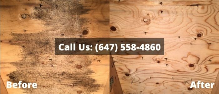 Mold Removal and Inspection in Aurora