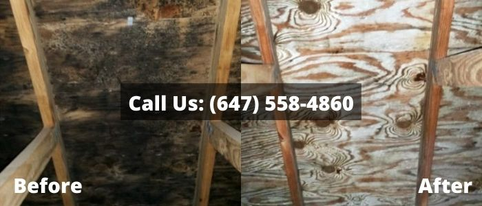 Mold Removal and Inspection in Brampton