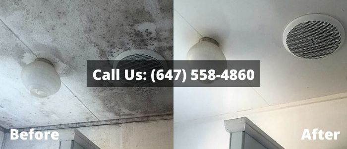 Mold Removal and Inspection in Clar
