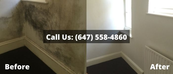 Mold Removal and Inspection in Kitchener