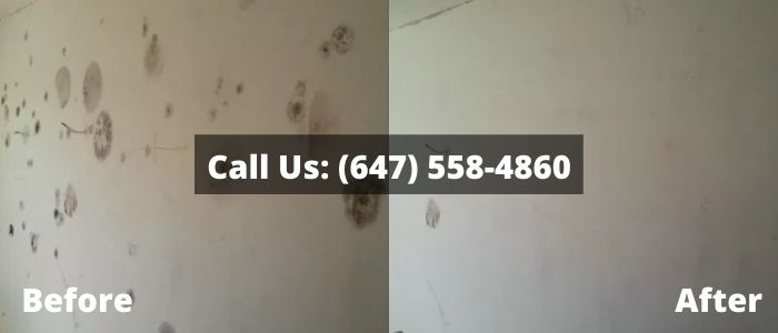 Mold Removal and Inspection in Mono