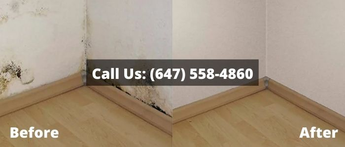 Mold Removal and Inspection in Waterloo