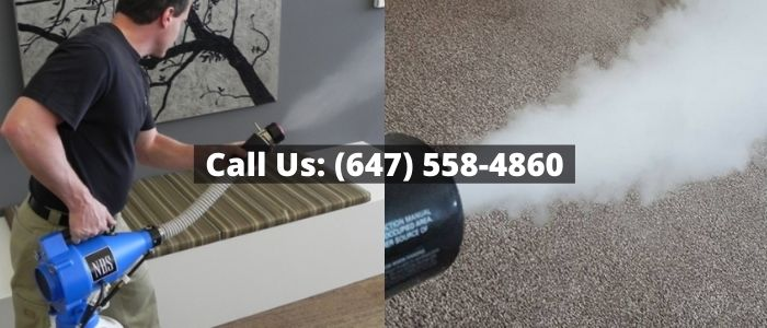 Musty Odour Removal in Toronto