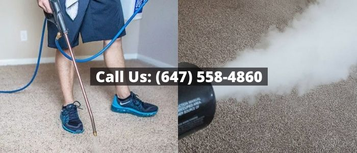 Skunk Odour Removal in Toronto