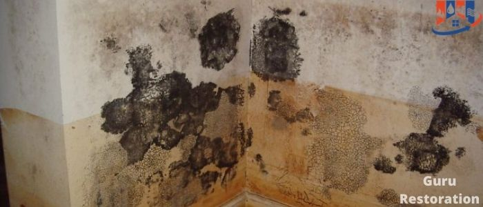 What Happens If You Paint Over Mold
