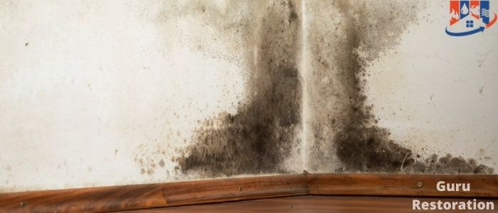 How To Detect Mold In Walls
