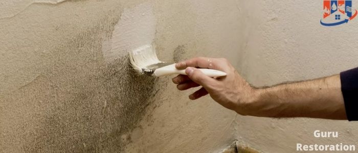 What To Do With The Wall Affected By Mold And Fungus
