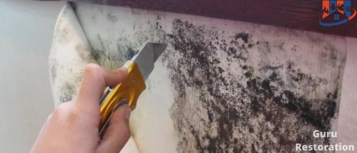 Visual inspection of mold in walls